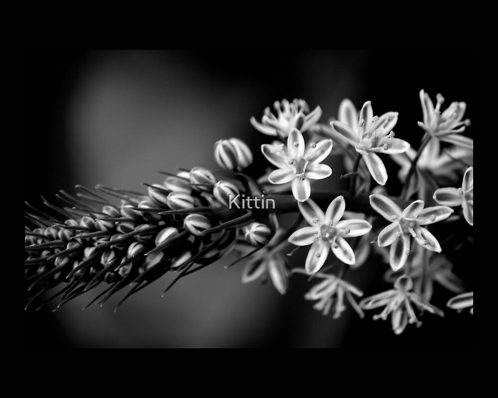 flower 34 by Kittin