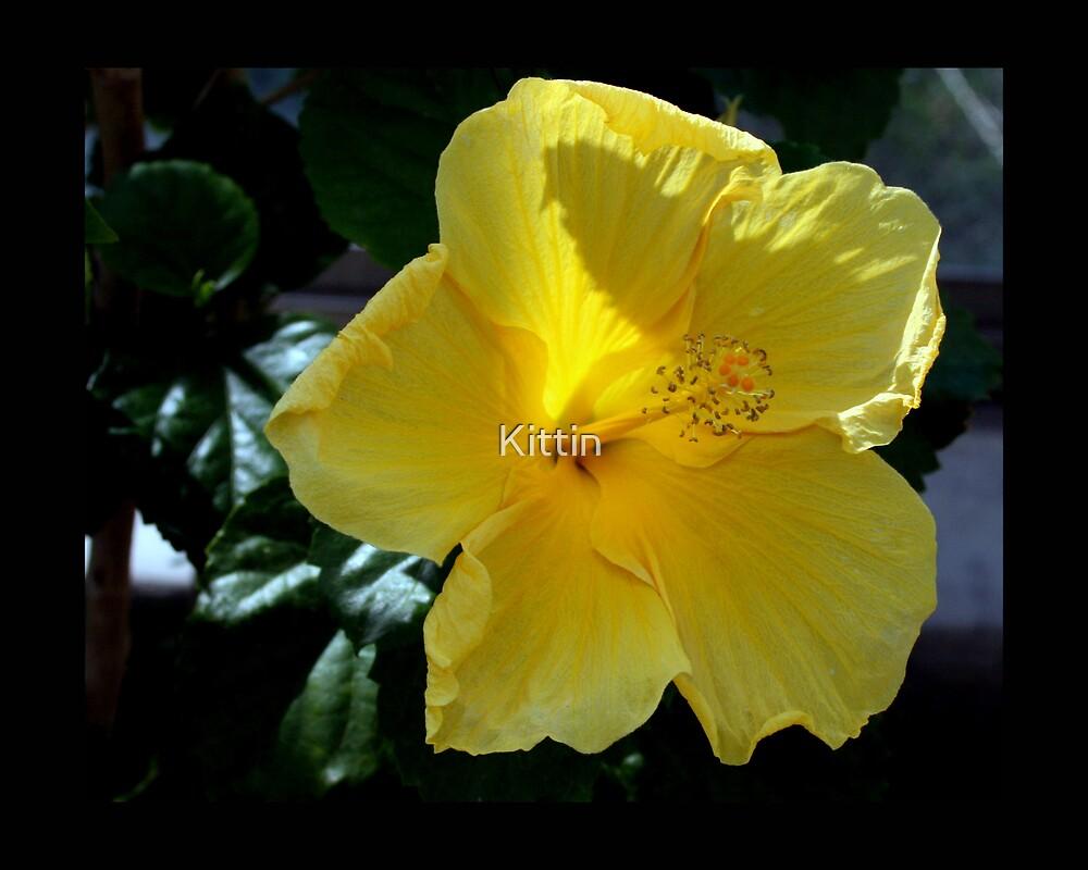 flower 38 by Kittin