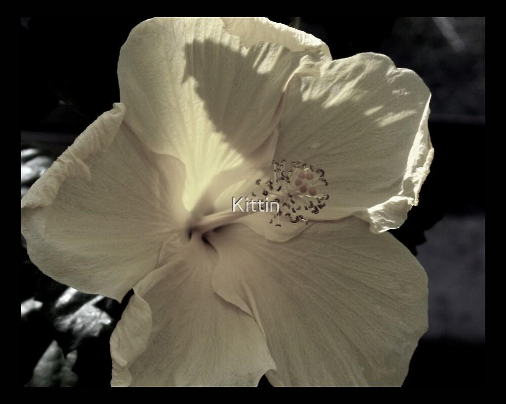 flower 40 by Kittin