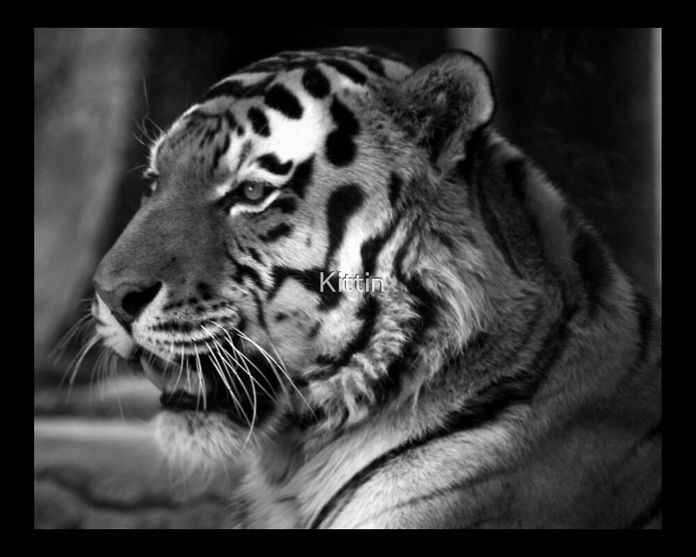 tiger 05 by Kittin