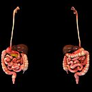 3D rendering of human digestive system. by StocktrekImages