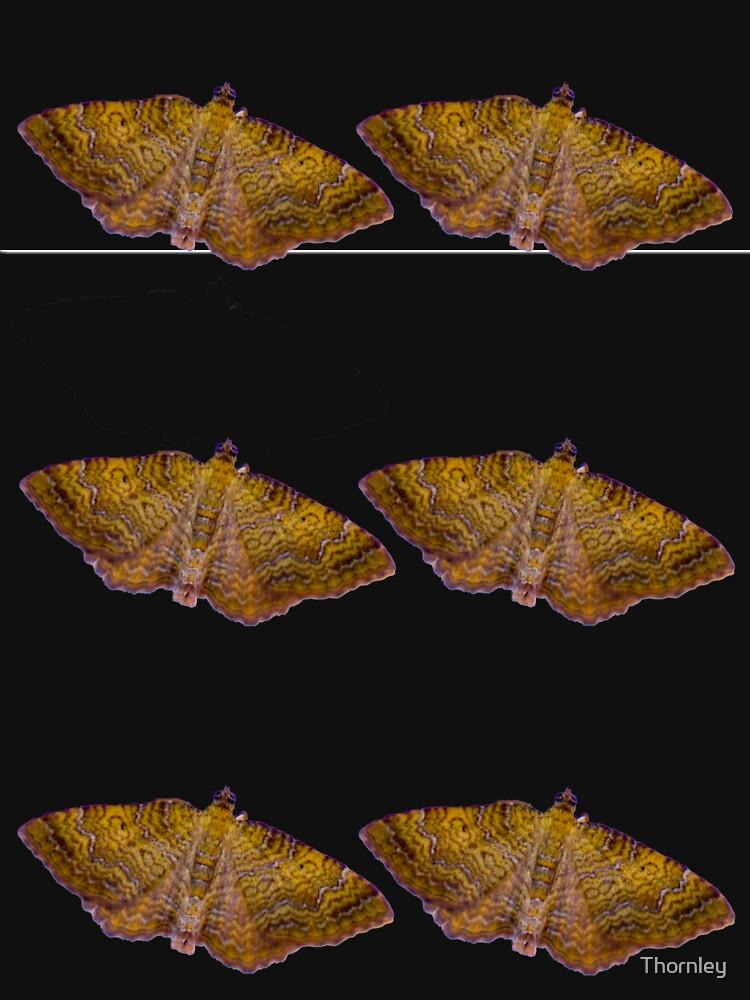 moths by Thornley