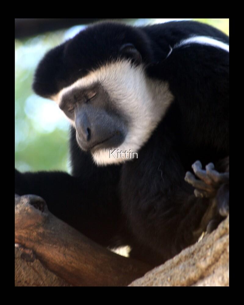monkey 01 by Kittin
