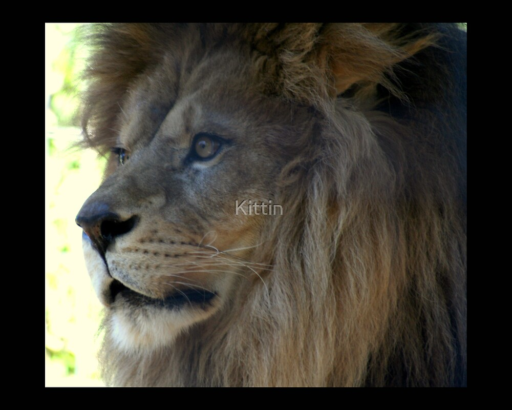lion 06 by Kittin