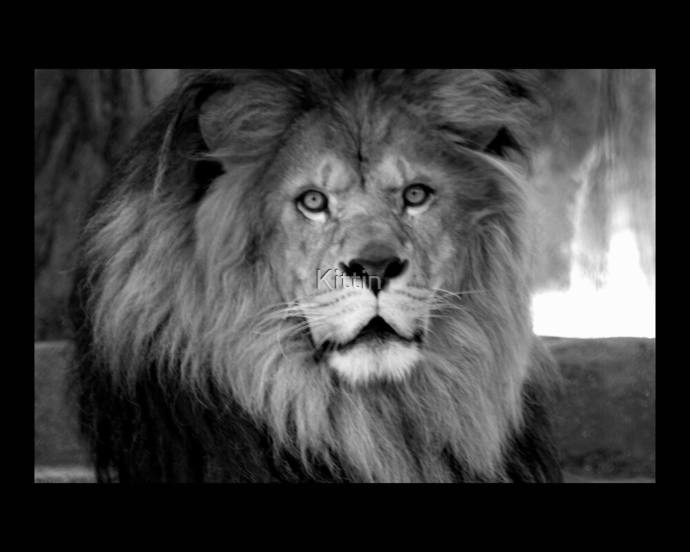 lion by Kittin