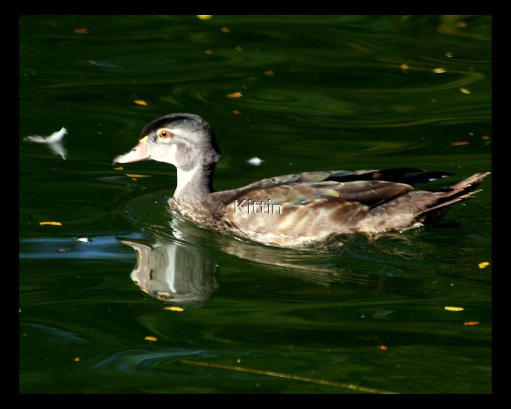bird 06 by Kittin