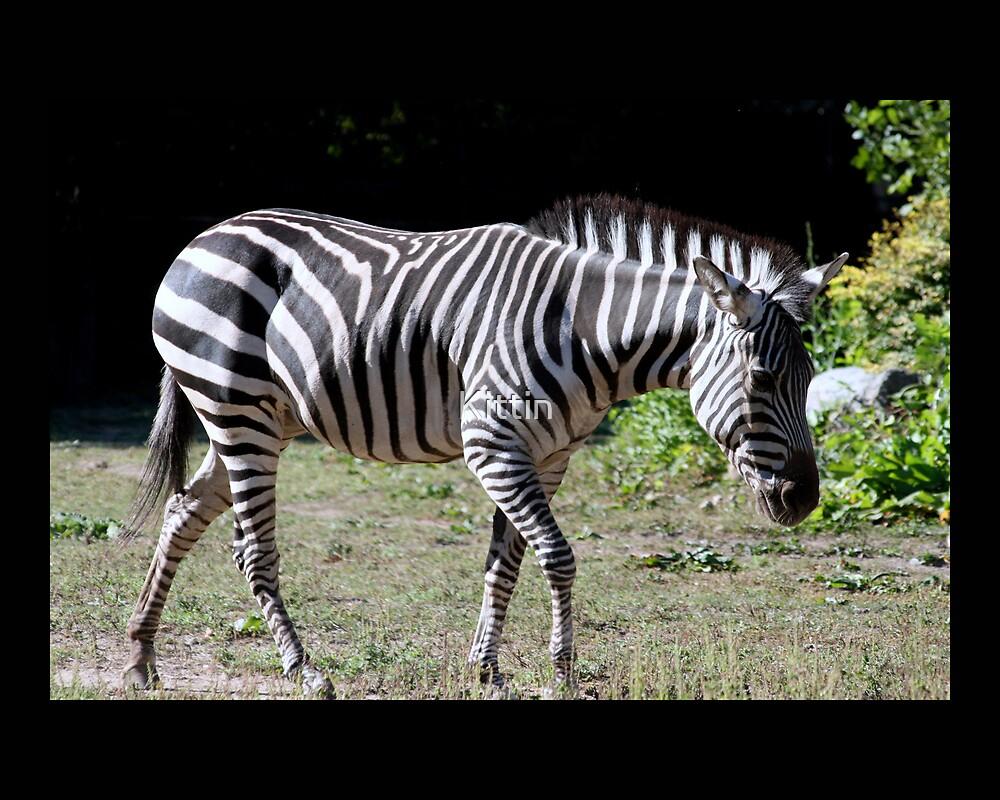 zebra 01 by Kittin