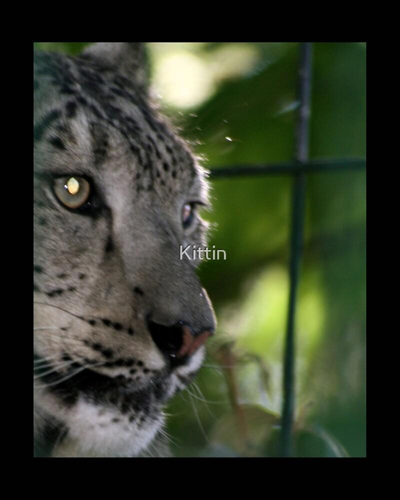 cat 01 by Kittin