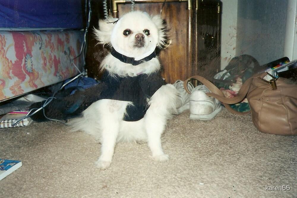 Bree Dog in a Tuxedo by karen66