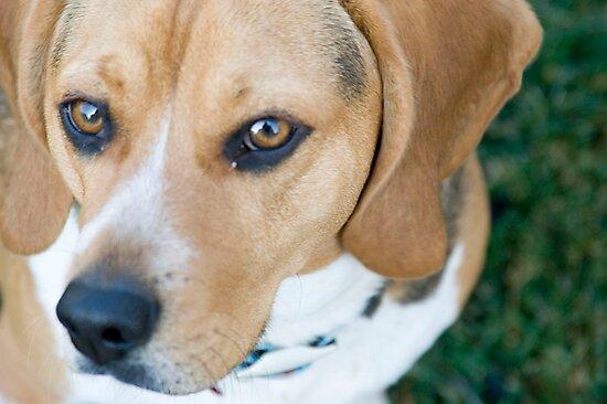Beagle Love by photovixen04