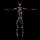 3D rendering of human lymphatic system. by StocktrekImages