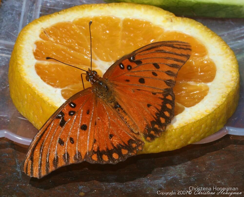 Orange On Orange by Christena Honeyman
