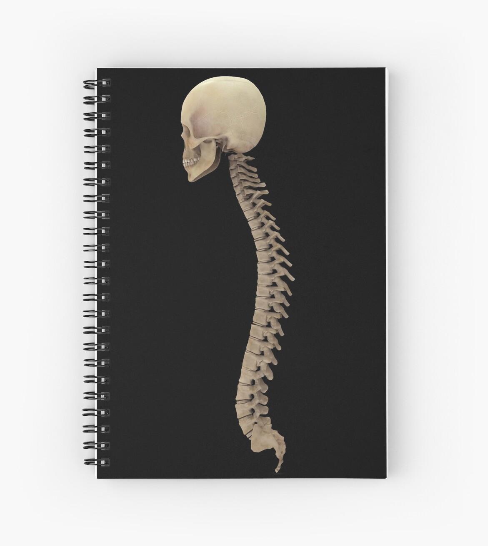 Cuadernos de espiral «Representación 3D de la columna vertebral ...
