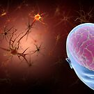 Conceptual image of human brain with neurons. by StocktrekImages
