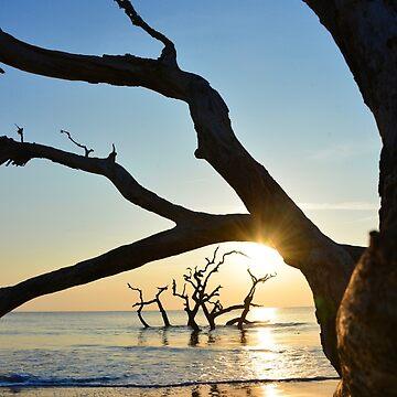 Gilden Sunrise at Driftwood Beach by berisme