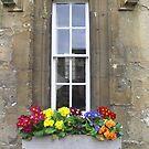 Oxford Window by Segalili