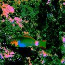 Parrot fish.... by Luke Jones
