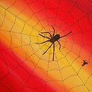 Spider Web by Derek Trayner