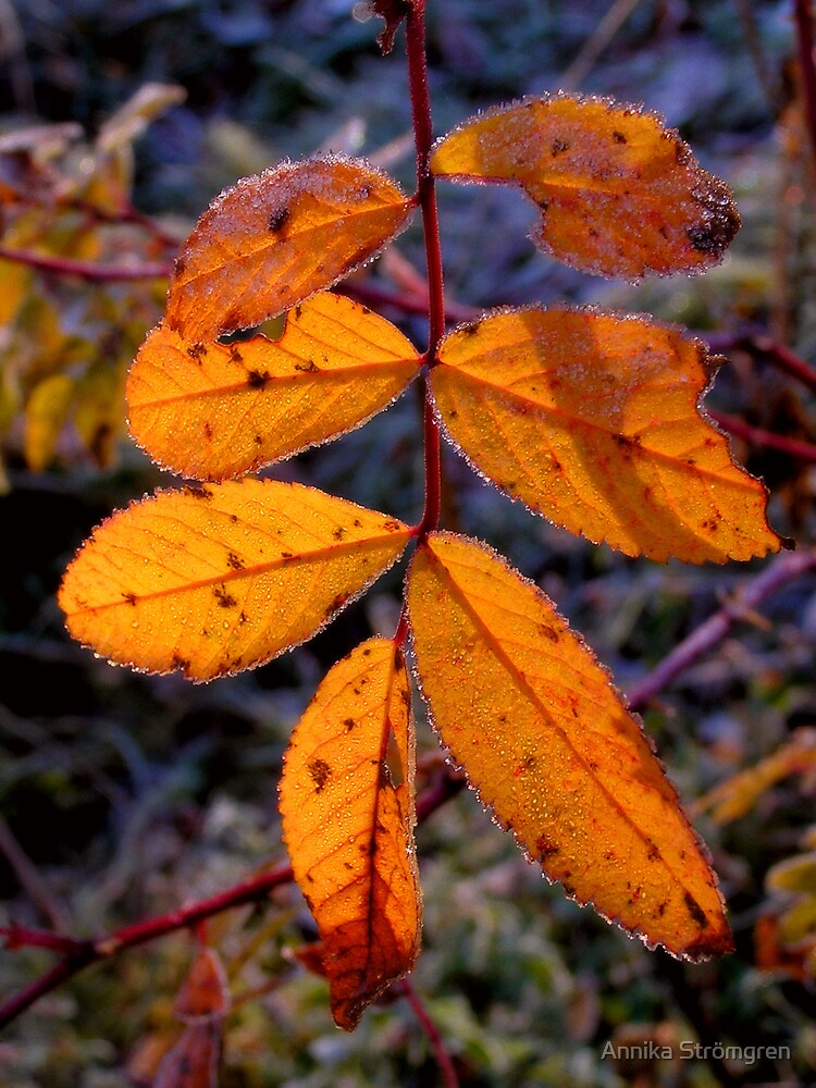 Autumn light by Annika Strömgren
