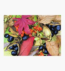 Fall Collage Photographic Print