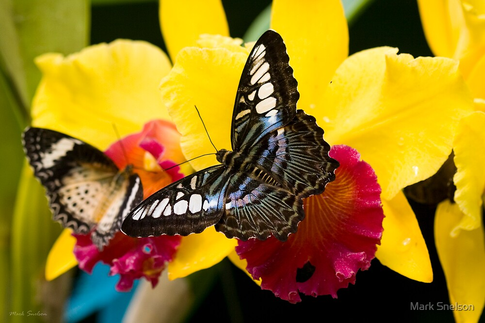 Butterfly on Yellow Flower by Mark Snelson