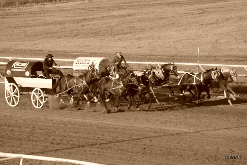 wild race by queent