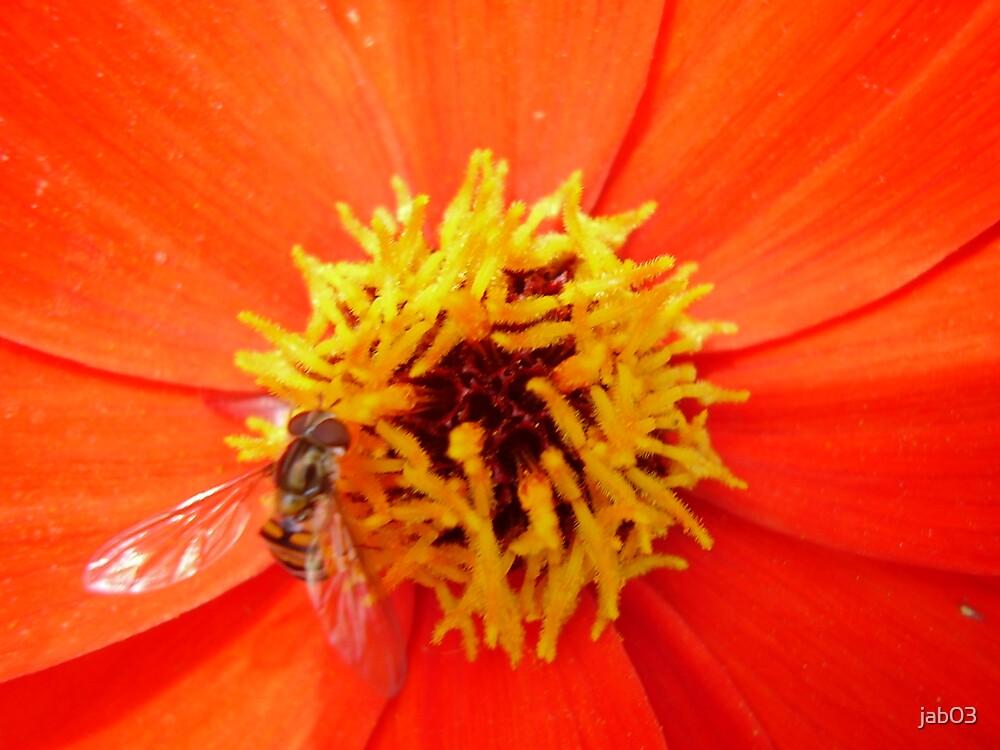Bee In a Flower by jab03