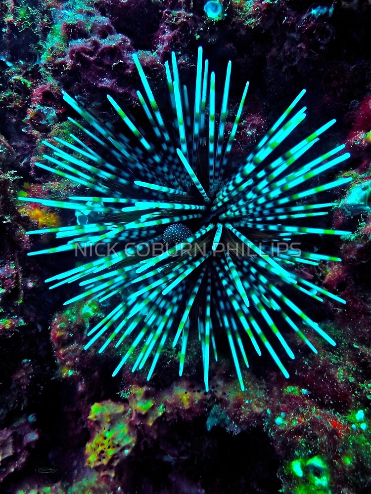GRUBBY LITTLE URCHIN! by NICK COBURN PHILLIPS