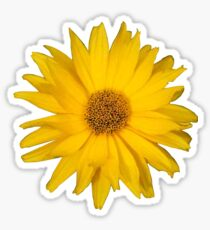 Sunflower lookalike Sticker