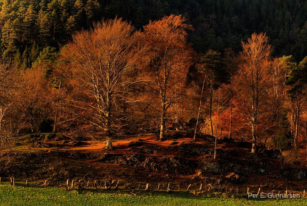 Autumn II  by Per E. Gunnarsen