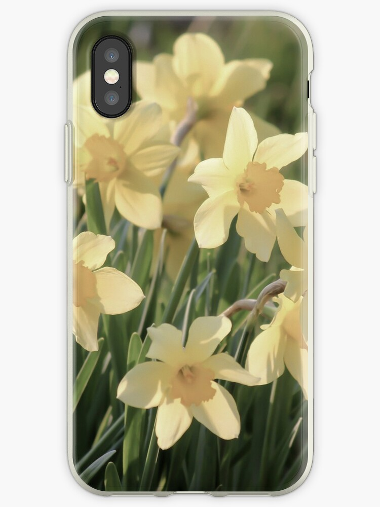 Daffodils in the Spring  by KArtisanStudios