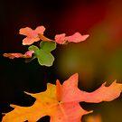 autumm leaves by P Michaud