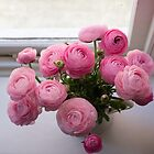Pink ranunculus by the window by Natalie Board
