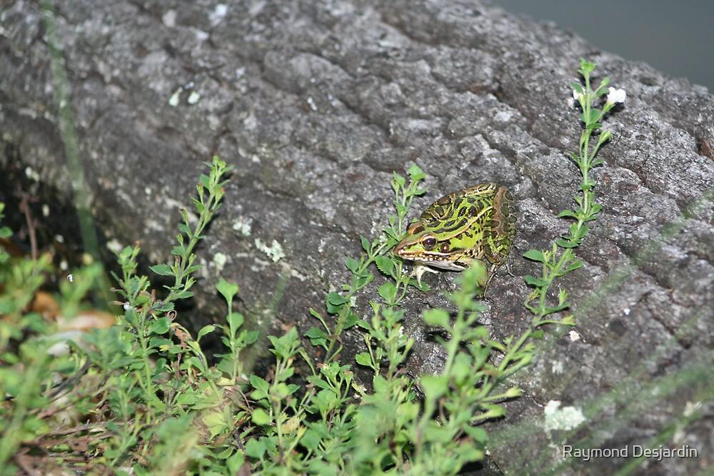 Unique Frog by Raymond Desjardin