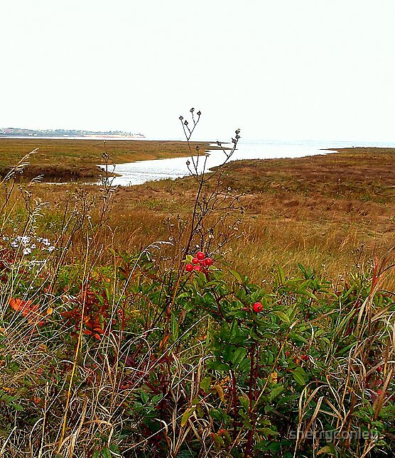 Rosehips by the Bay by sherryconley
