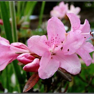 Pretty in Pink by DaniMorin519