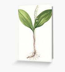 Lily of the Valley - Convallaria majalis Greeting Card