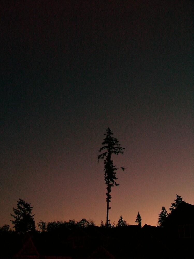Single Tree by Natania Rogers