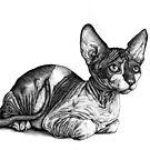 «El gato real» de Heleacla
