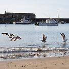 Seagulls Dance - Lyme Regis by Susie Peek