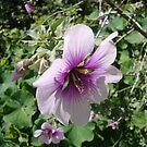 Purple flower by plaidfluff