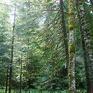 Forest glow by plaidfluff