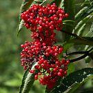 Berries by plaidfluff