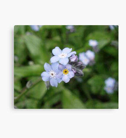 Petals of Wild Blue Canvas Print