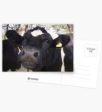 Mooooo Postcards