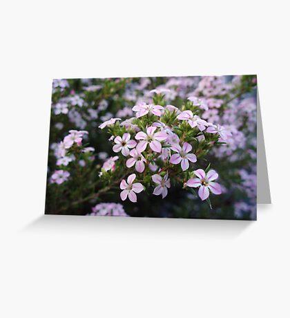 Pink Diosma in Bloom Greeting Card