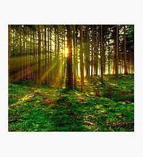 Forest Sunrise Photographic Print