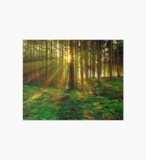 Forest Sunrise Art Board
