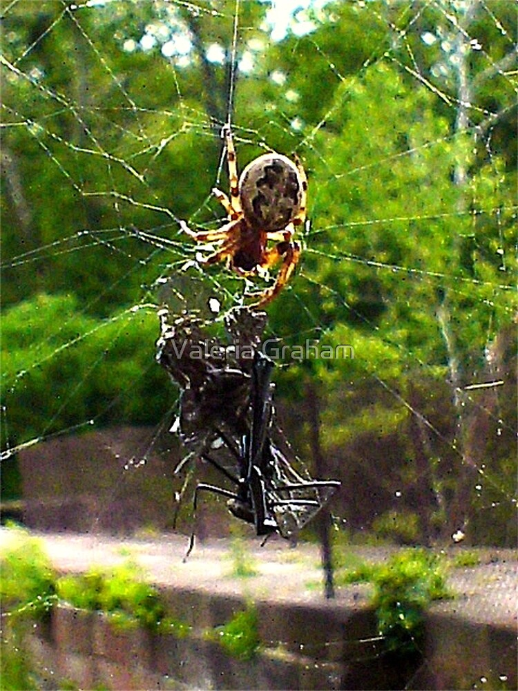 Lunch time spider web by Valeria Lee