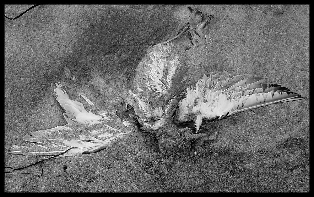 Fallen Angel by Jenni77